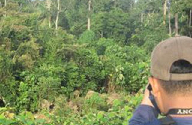 Ilustrasi Hutan di Kalteng